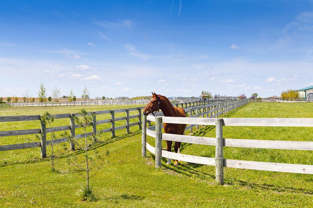 Horse Corral 2.jpeg