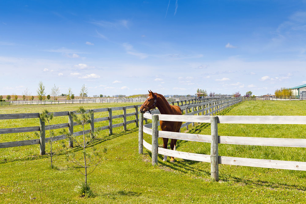horse fencing 2.png
