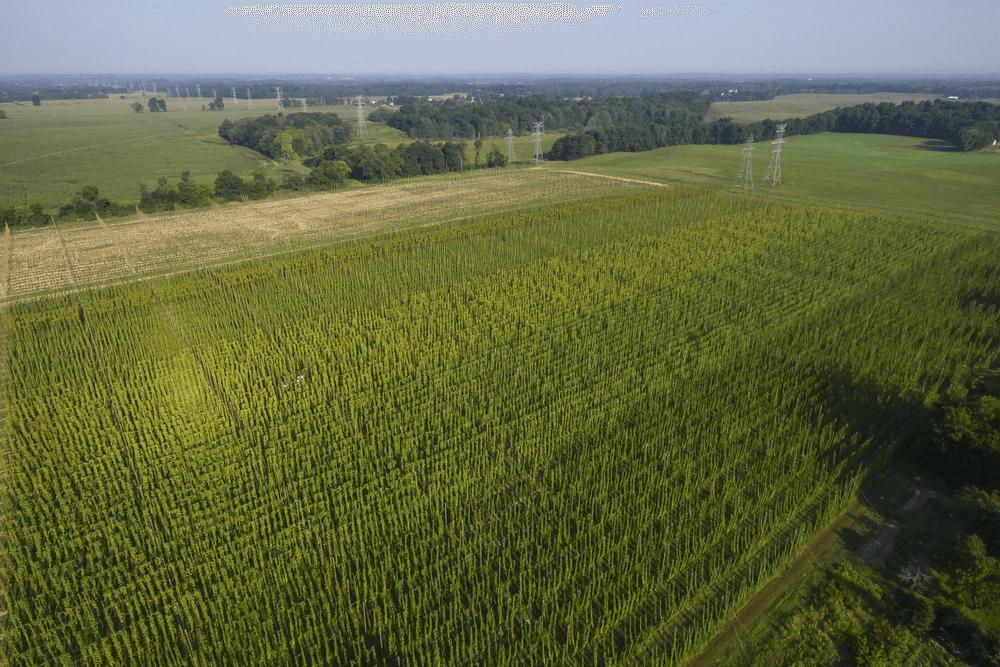 fields.png