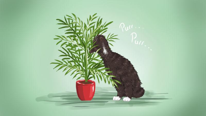 the best low maintenance pet friendly houseplants - Tall House Plants Low Light