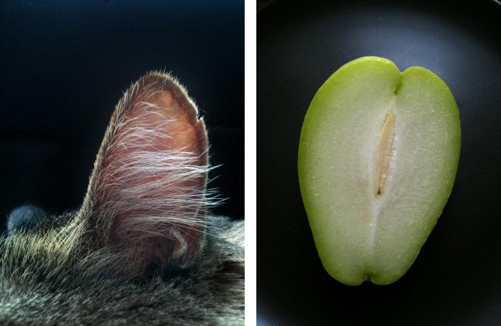 ear+Pear.jpg