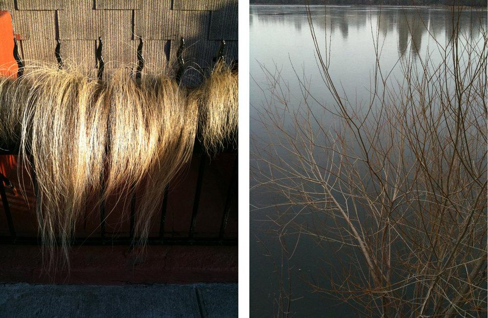 resevoir+hairyplant.jpg