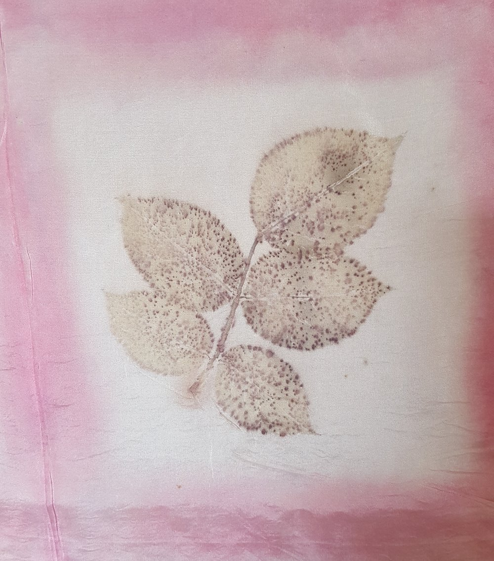 Rose leaf on silk habotai, cochineal border
