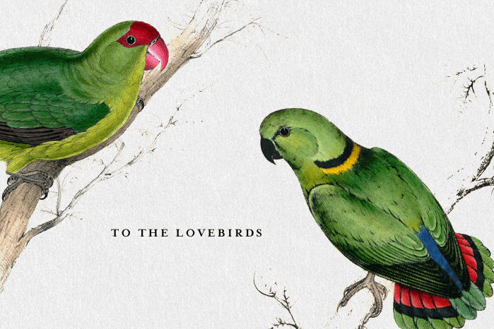 Tendr Card Lovebirds Spencer Bagley