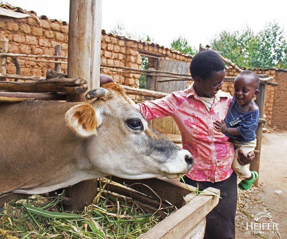 Clementine and her son Boneri visit the family cow on their farm in Rwanda. Photo: Heifer.