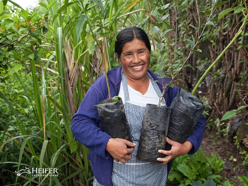Griselda, a Heifer farmer in Guatemala. Photo:  Heifer .