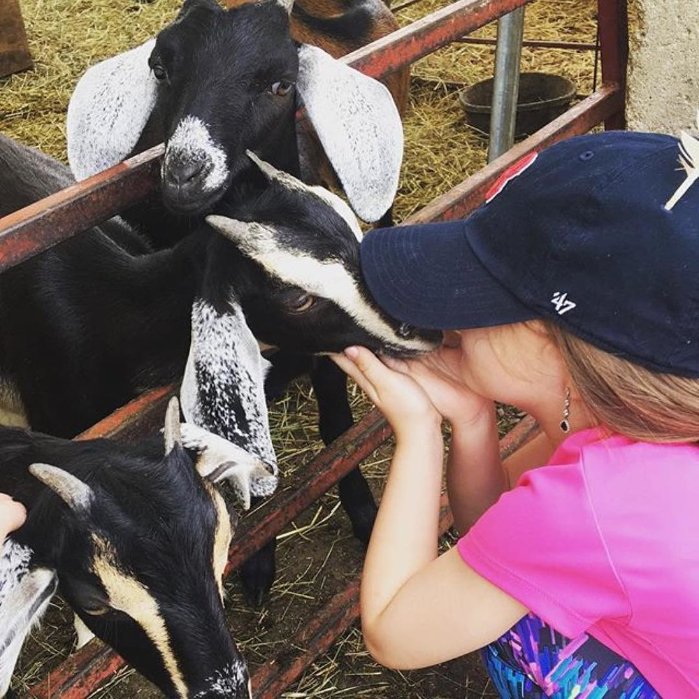 A little girl getting up close with some goats at one of Heifer's U.S. projects. Photo: Heifer.