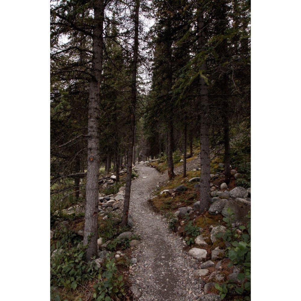 Woods-1.jpg