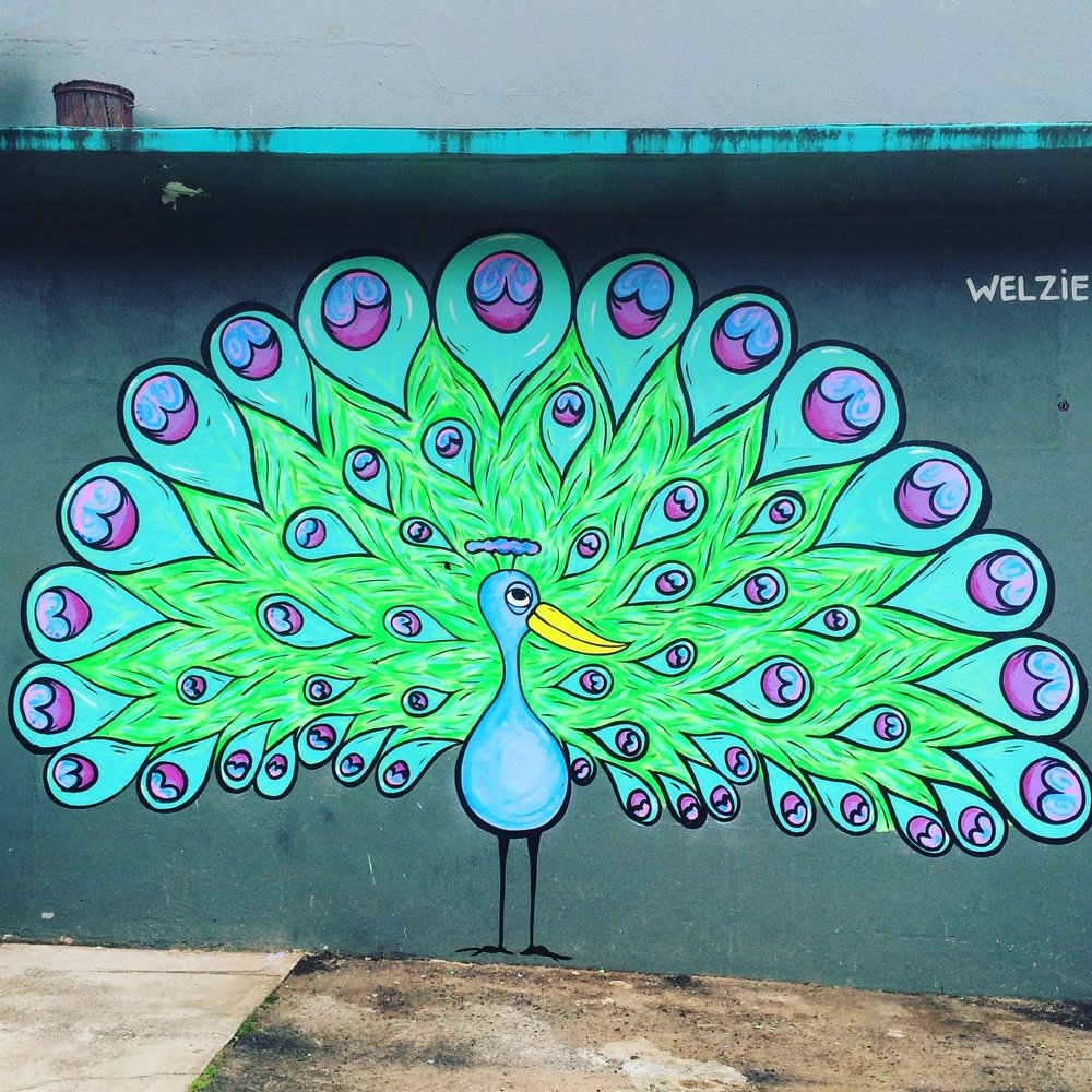 This Peacock was painted on the side of North Shore Surf Shop in Haleiwa. I was so stoked on how bright it came out and how the feathers have developed.