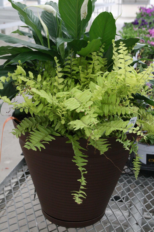 Planter4.jpg