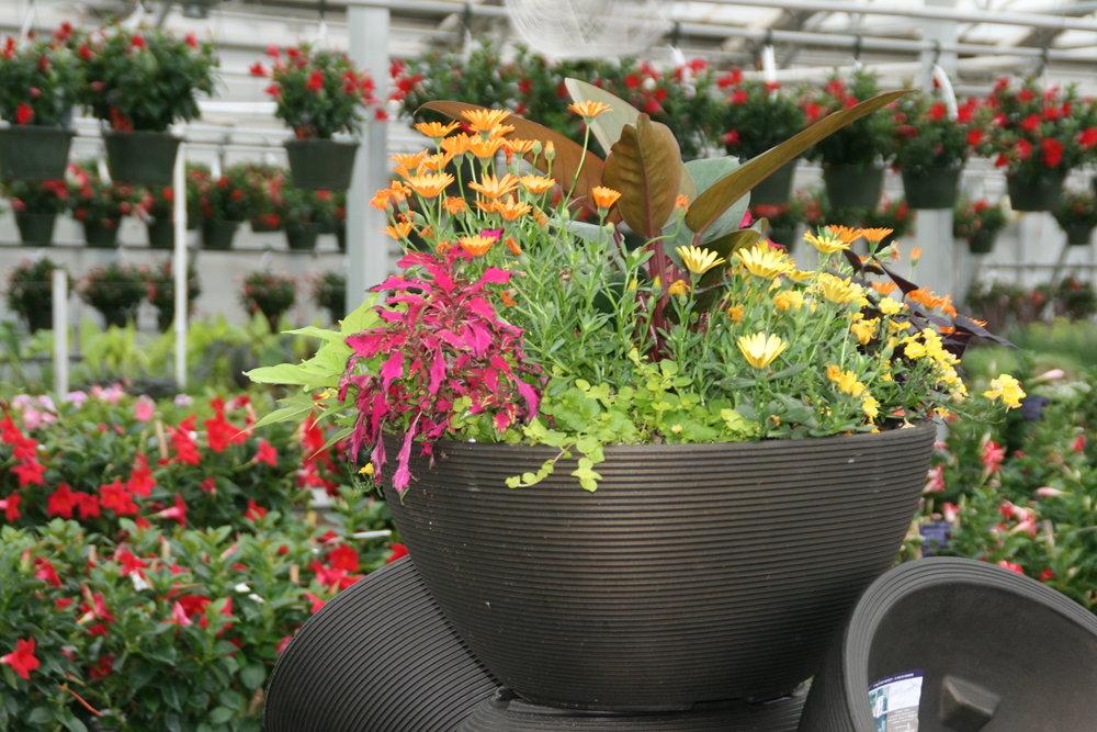 Planter5.jpg