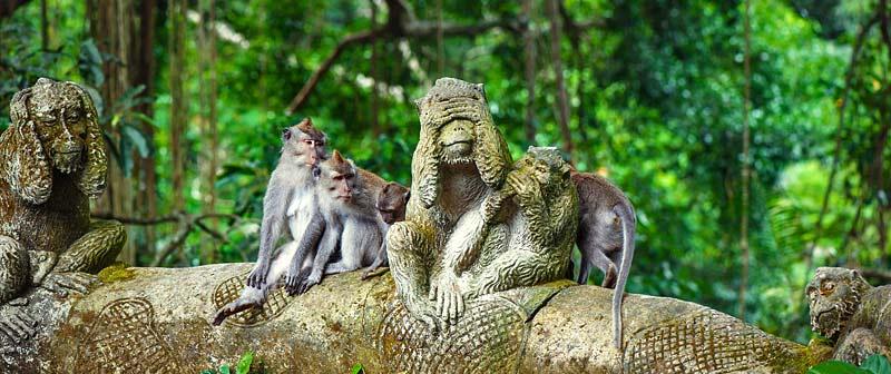 monkeys bali.jpg