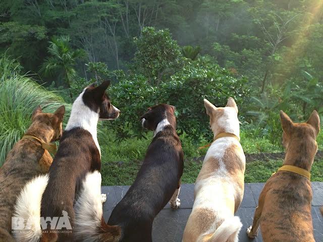 Bali Dogs.jpeg