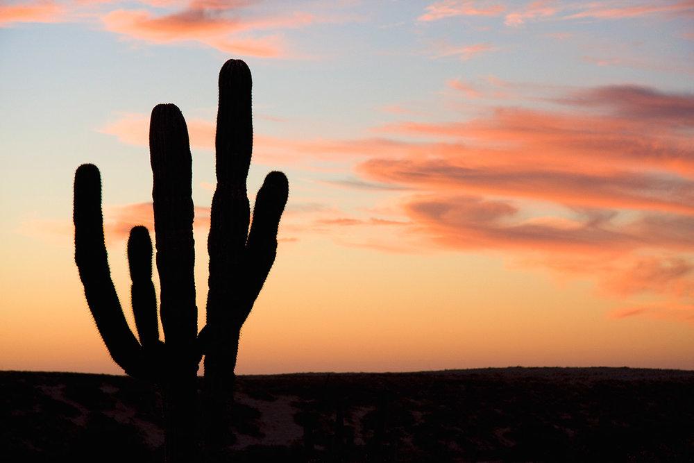 gallery_cactus_silhouette_sunset.jpg