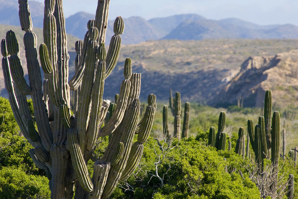 gallery_cactus_mountains.jpg