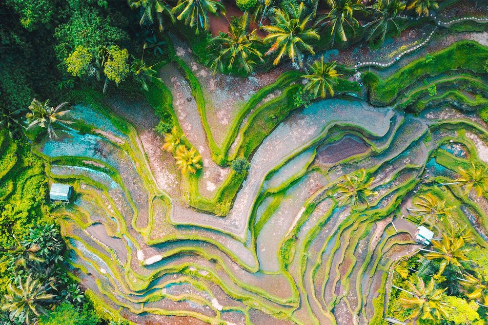 Refill-Bali.jpg