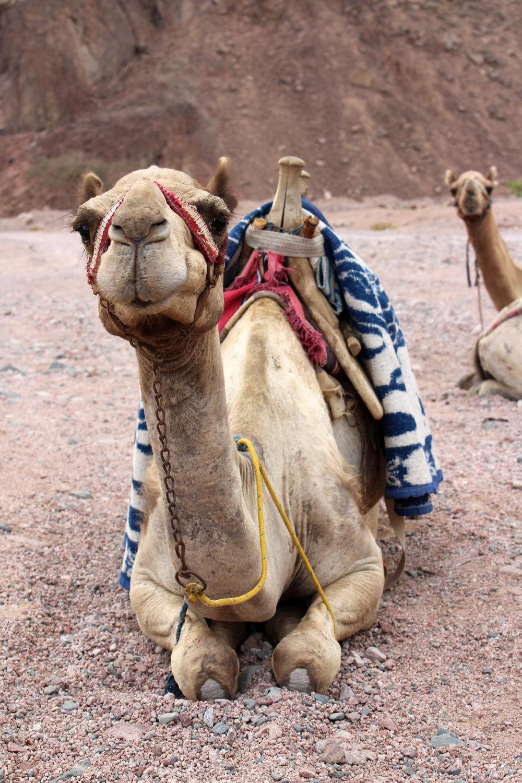 Dahab_Coachhouse_Egypt_Beach_Red_Sea_Trip_Wadi_Gnai_Camel_Mountain_Granite.JPG