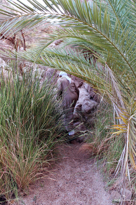 Dahab_Coachhouse_Egypt_Beach_Red_Sea_Trip_Wadi_Gnai_Camel_Mountain_Granite_Bedouin_Date_Palms_Oasis_Path.JPG