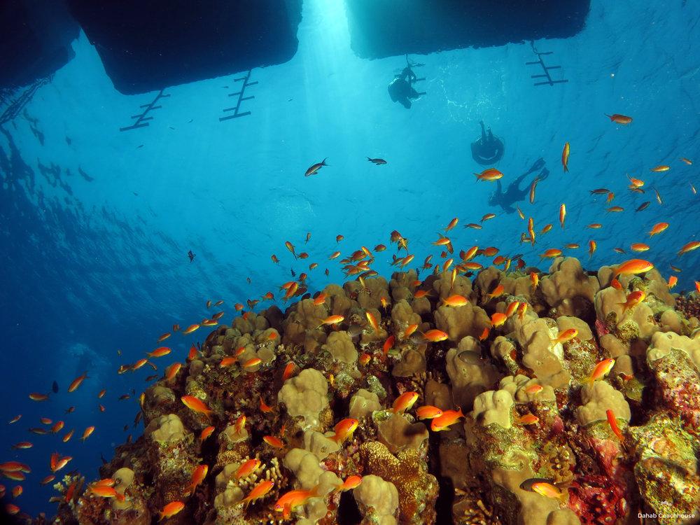 Dahab_Coachhouse_Egypt_Red_Sea_Diving_Beach_Accommodation_Holiday_Trave_Boat.JPG