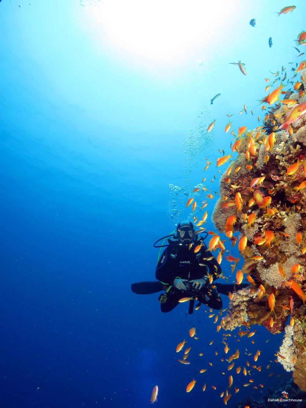 Dahab_Coachhouse_Egypt_Red_Sea_Diving_Beach_Accommodation_Holiday_Travel_Diver.JPG