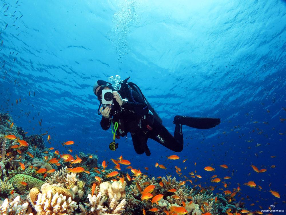 Dahab_Coachhouse_Egypt_Red_Sea_Diving_Beach_Accommodation_Holiday_Travel_Diver_Anthias.JPG