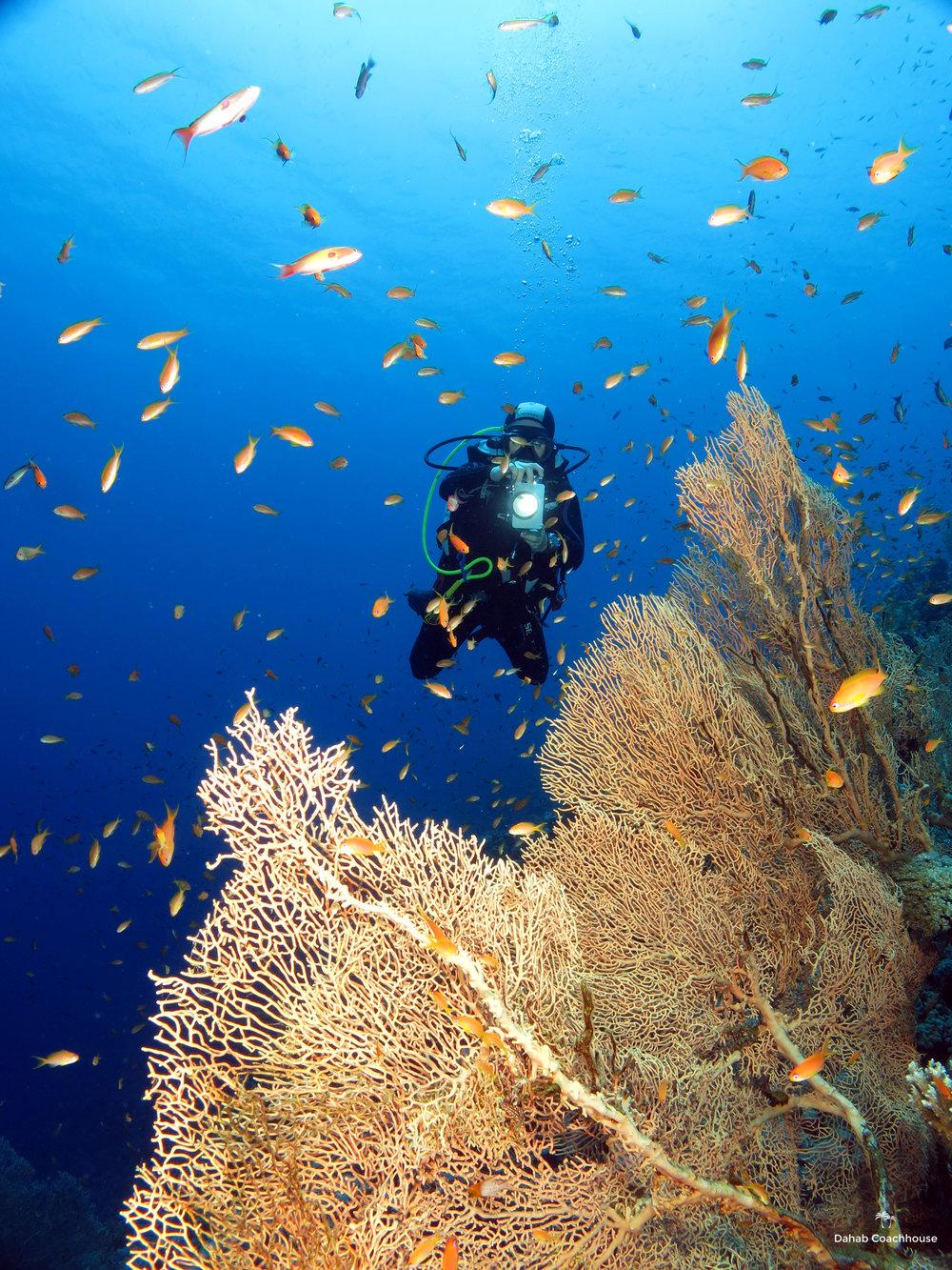 Dahab_Coachhouse_Egypt_Red_Sea_Diving_Beach_Accommodation_Holiday_Travel_Diver_Photo.JPG