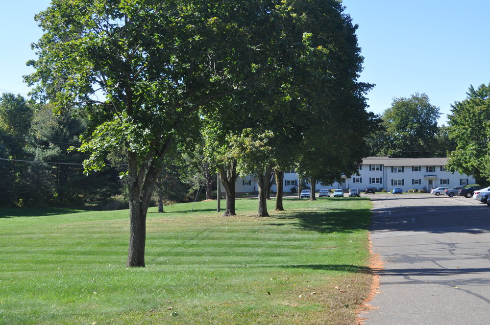 Row of trees on grass with a road leading to a white building in the back.