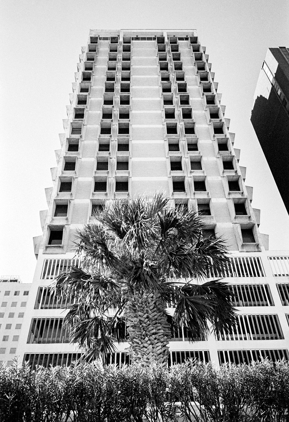 Brutalism and a Palm Tree in downtown Corpus Christi - Nov 2017 - Suzanne Koett