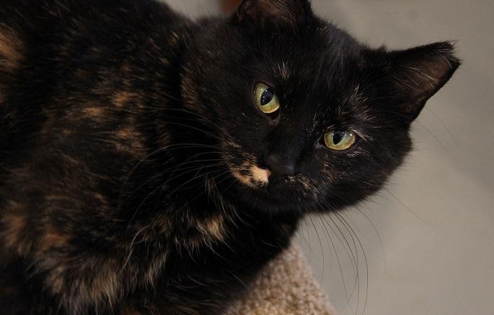 prevent feline leukemia