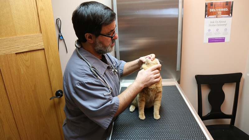 Dr. Nadder Samari is a veterinary surgeon, available to care for your pet!