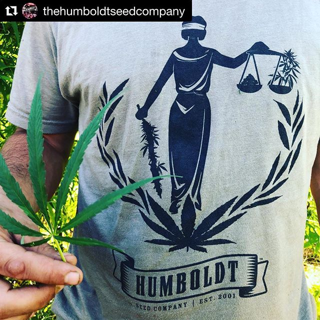 Much love to @thehumboldtseedcompany for sharing their #geneticthreadstyle. Always a great feeling to be recognized but such epic peers #unityinthecommunity #Repost @thehumboldtseedcompany with @get_repost ・・・ @geneticthreads shirts are super fun, here's ours. Pictured is one of the Blue Nile landrace genetics that we bred in isolation this year... harvest is looking like it'll be in November. Check out the Genetic Threads monthly breeder boxes!