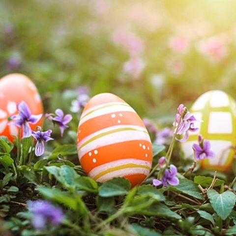 Did you know over 180 million eggs are purchased each year for Easter? Cheers to the Farmers who make spring bright and colorful! #myjobdependsonag #agrifarmgroup #agrimend