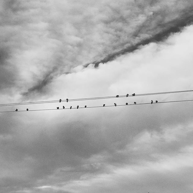 """Crows on line"""