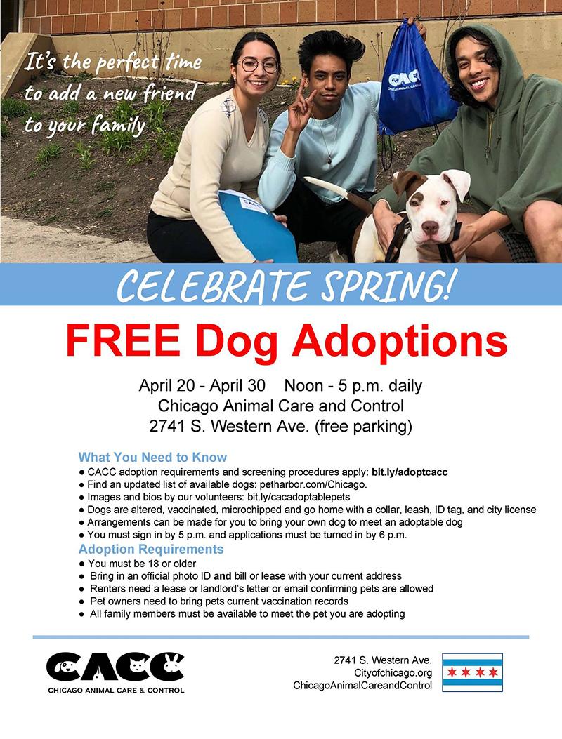 Free Dog Adoptions.jpg