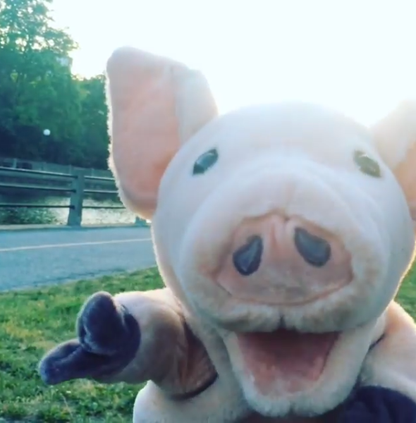 Bulgarian Pig living it up in Toronto, July 2016