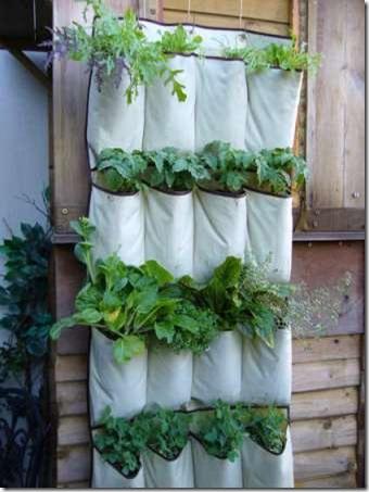 垂直蔬菜在一个小花园中成长