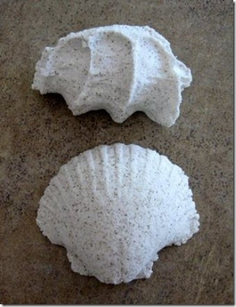 Beach Shells Bath FIzzies Post-6