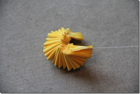 daffodil 15