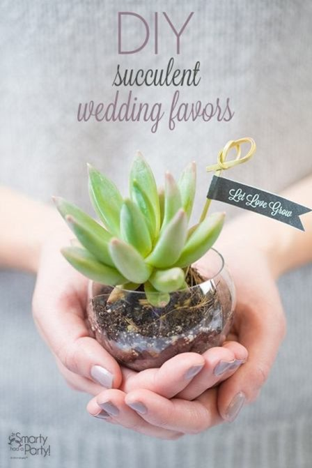 DIY Succulent Wedding Favors from Smarty had a Party