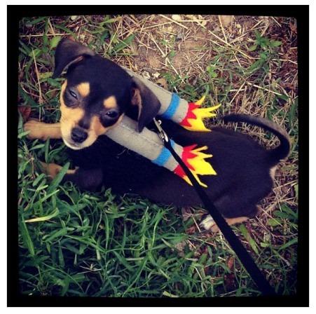 来自Super Happy Fun Knitty Time的Dog Jet Pack