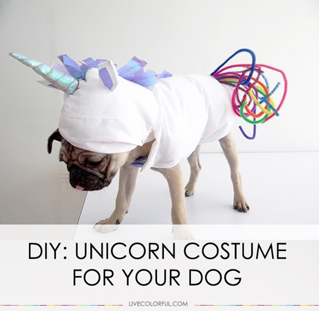 Live Colorful的独角兽狗服装
