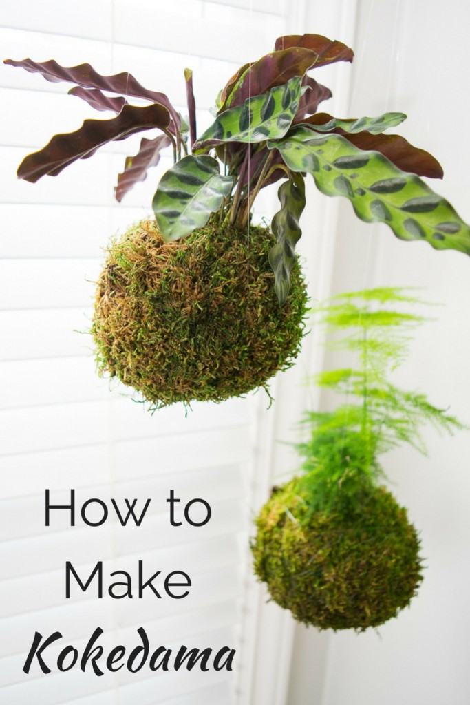 Kokedama Japanese Moss Ball from The Handyman's Daughter.jpg
