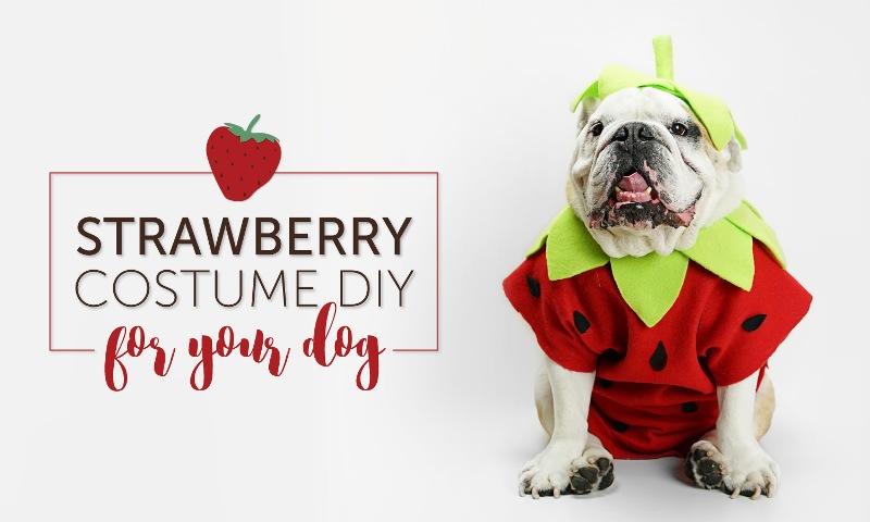 Strawberry Costume from Shari's Berries