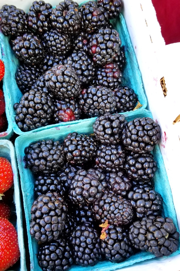 Oregon Blackberries from RJ Farms