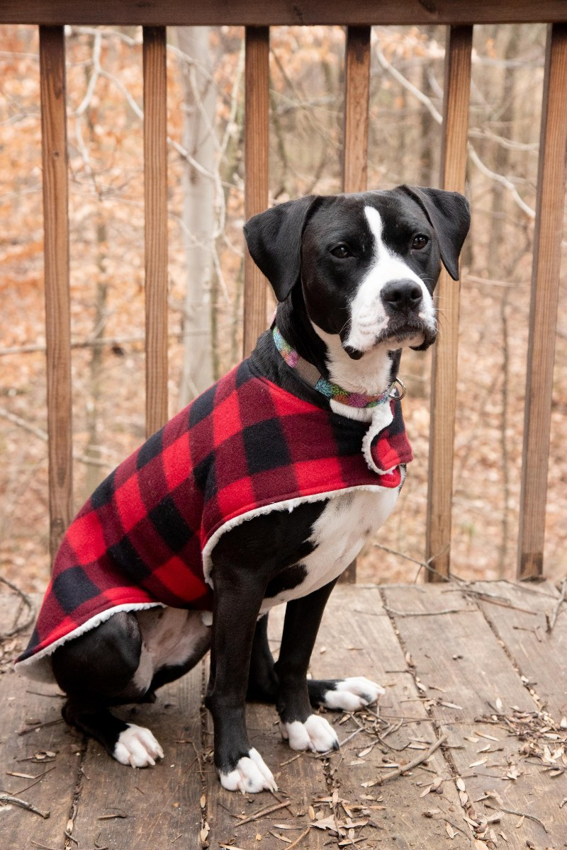 Dog Coat Tutorial from Wholefully