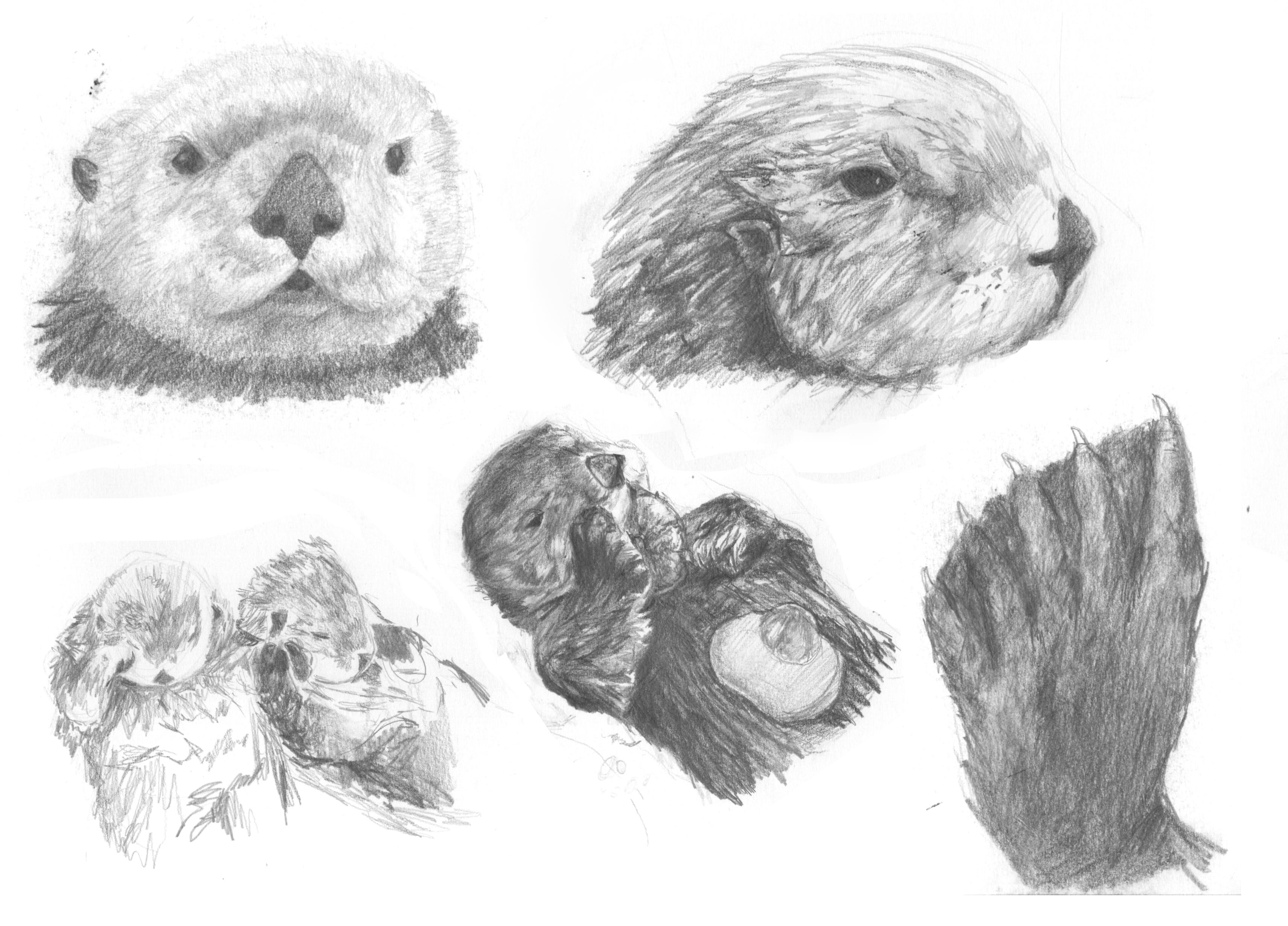 otter sketches batch 4.jpg