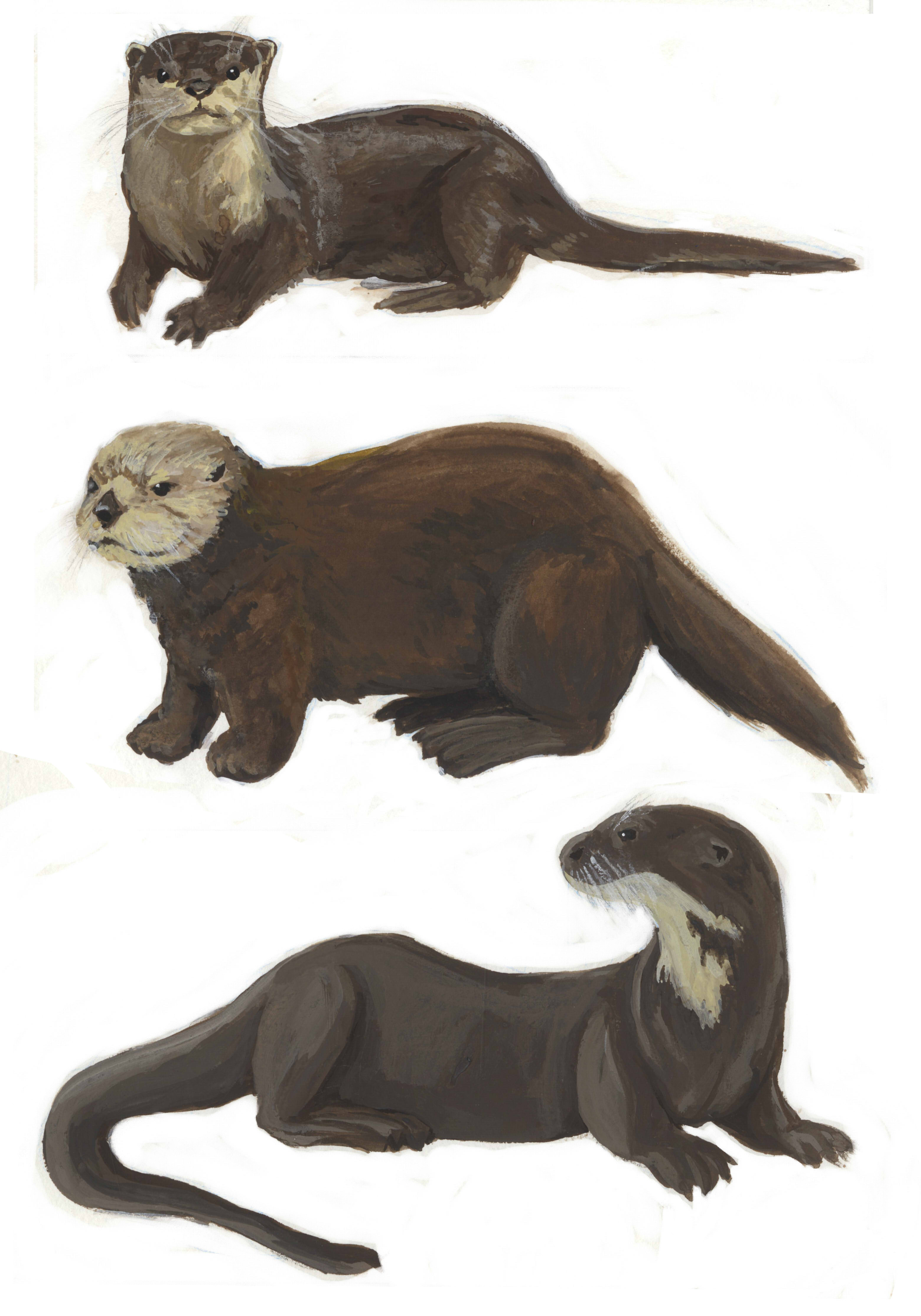 otter sketches batch color.jpg
