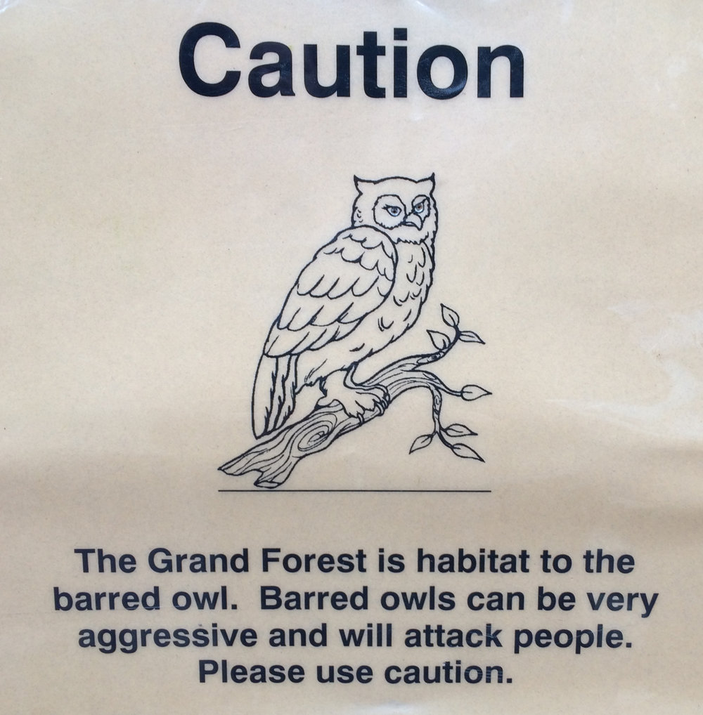 Caution: Beware the barred owl!