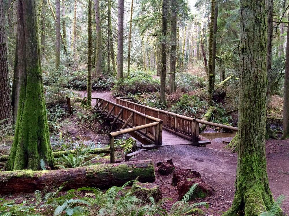 The Grand Forest Bridge