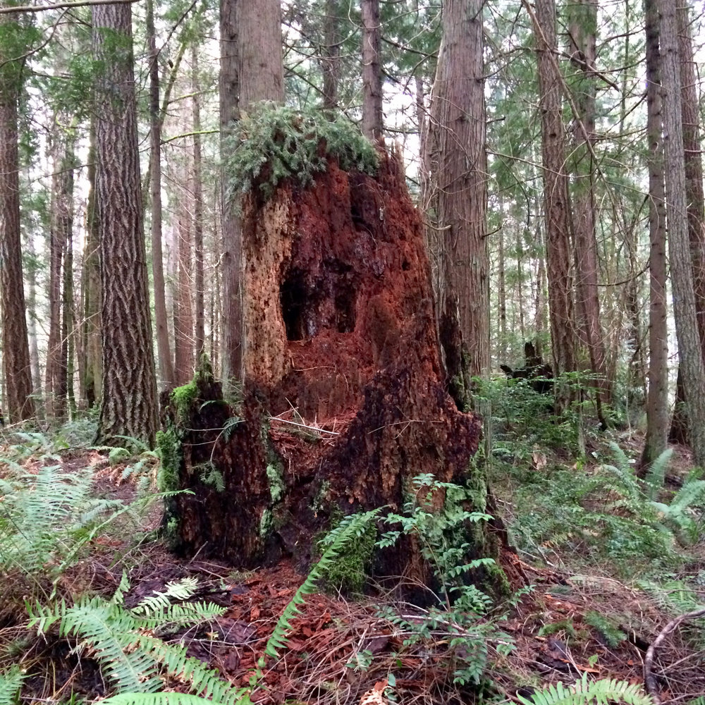 Crazy old tree stump that looks like a friendly monster